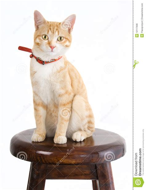 Cat On The Chair by Ginger Cat On Chair Royalty Free Stock Photos Image