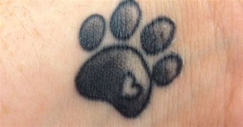 realistic cat paw print www imgkid com the image kid