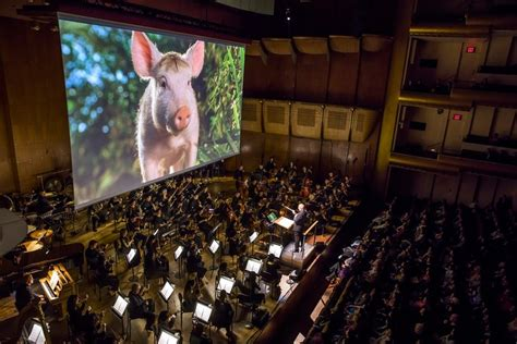 babe film ferdinand babe pig at the philharmonic the new yorker