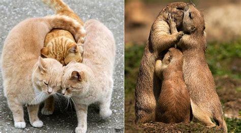 Kerangkeng Kucing kumpulan gambar lucu ini bikin kamu nggak bisa berhenti tertawa