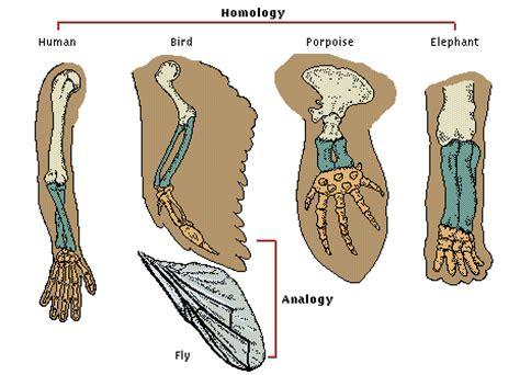 Tentang Bio bio kita bukti evolusi