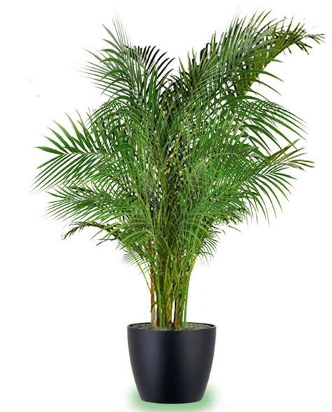 las  mejores plantas grandes de interior