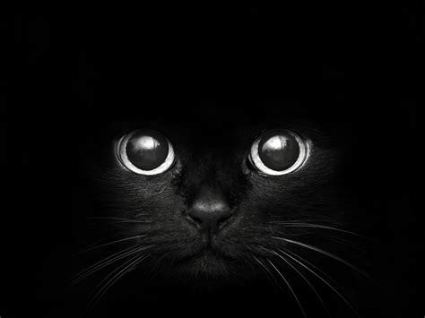 wallpaper black face cat christmas hat wallpaper animal wallpaper wallpaperlepi