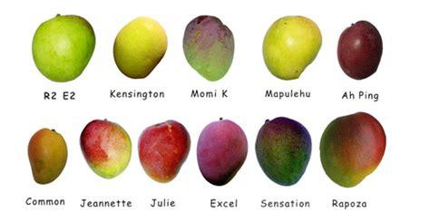 mango types flickr photo sharing
