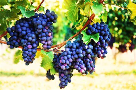 backyard berry plants 7 easily propagated fruits for transforming your backyard