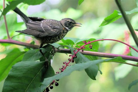 what do backyard birds eat esa annual meeting ecological society of america