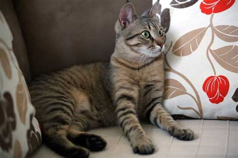keep cats off couch how to cat proof your home and keep your feline friend safe