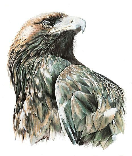 tattoo wedge tail eagle 25 best ideas about eagle drawing on pinterest eagle