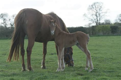 welsh section a foals for sale welsh section b foal pewsey wiltshire pets4homes