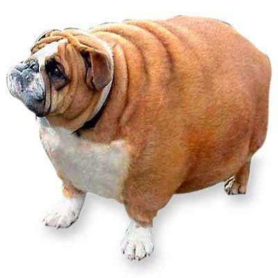 imagenes de animales gordos la gente que pone fotos de bichos abandonados