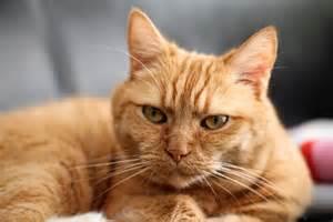 Free photo: Cat, Red Cat, Kitten, Pet, Red - Free Image on Pixabay ... Cat
