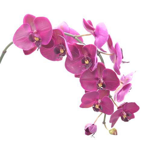 orchideen gestell orchids