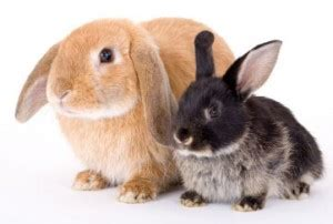 Im In Vegas With Bunnys Help 2 by What Your Rabbit Really Needs Vet Help Direct