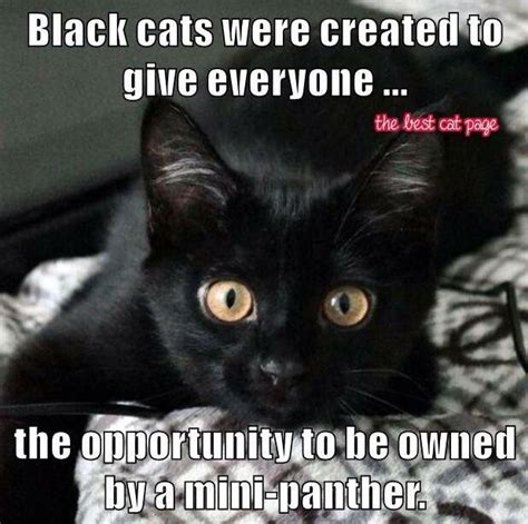 Black Cat Memes - black cats what someone wrote down