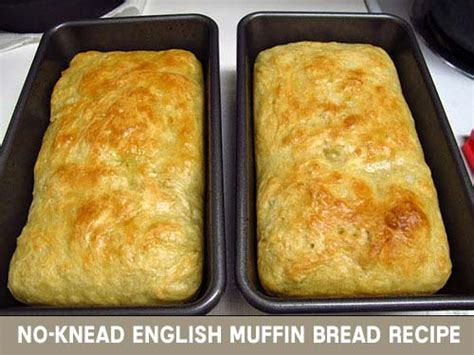 no knead english muffin bread recipe budgetmeals info