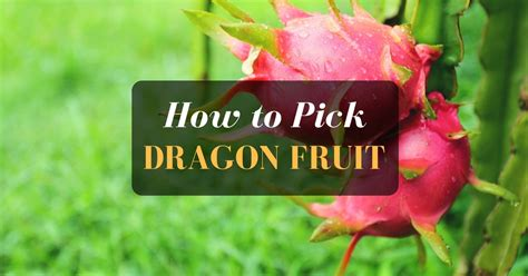 tips to choose small yard in 2017 on yard design ideas how to pick a dragon fruit knowing and tips sumo gardener
