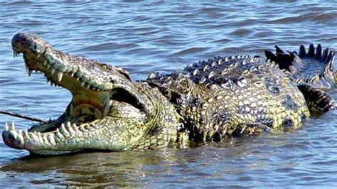el cocodrilo al que 191 d 243 nde vive el cocodrilo