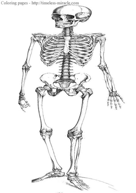 human skeleton coloring pages timeless miracle com