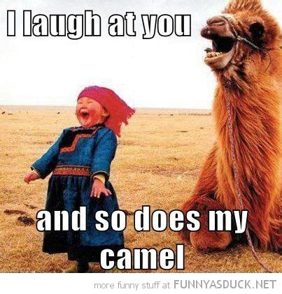 Camel Memes - image gallery laughing at you pictures