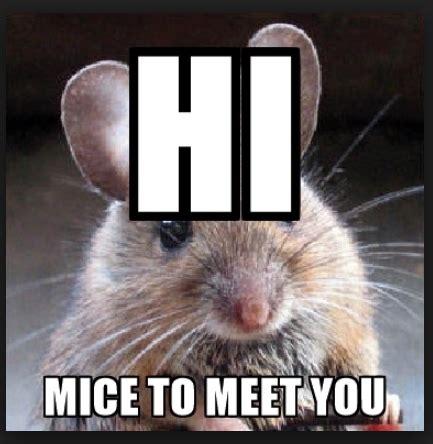 Mouse Meme - 20 mouse memes you ll find adorable sayingimages com