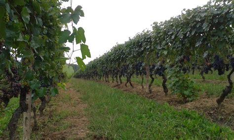 amaca di michele serra l agricoltura secondo michele serra www pellegrinoconte