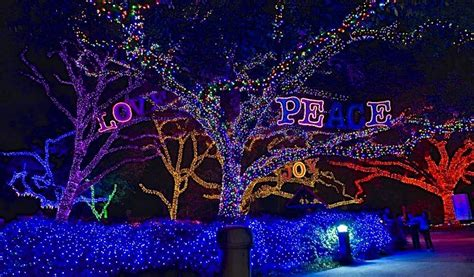 Houston Zoo Lights by Zoo Lights Houston 2014 365 Houston
