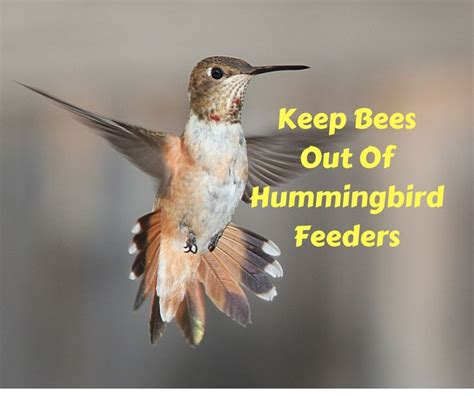 the 25 best keep bees away ideas on pinterest bounce