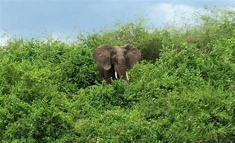 queen elizabeth national park uganda wildlife an ultimate wildlife experience on a uganda tour goway