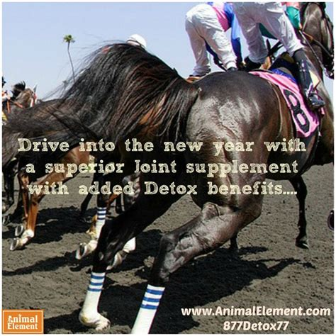 Animal Element Detox by Drive Into The New Year With The Nations Leading Equine