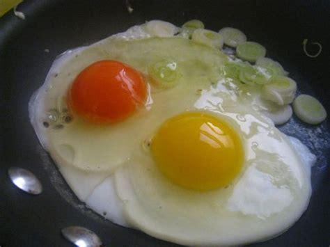 organic organic eggs