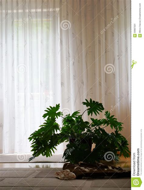 plants for dark rooms home plant stock photo image 59987501