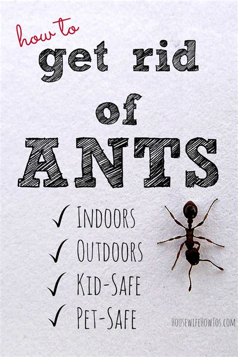 Safe Way To Get Rid Of Ants In Kitchen by How To Get Rid Of Ants Non Toxic Kid And Pet Safe