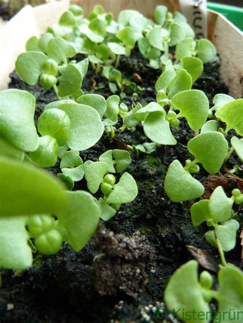 Pflanzen Kaufen by Pflanzen Kaufen Oder Selber Ziehen