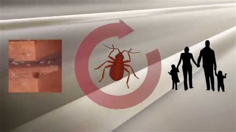 how to go to bed fast how to get rid of bed bugs fast youtube