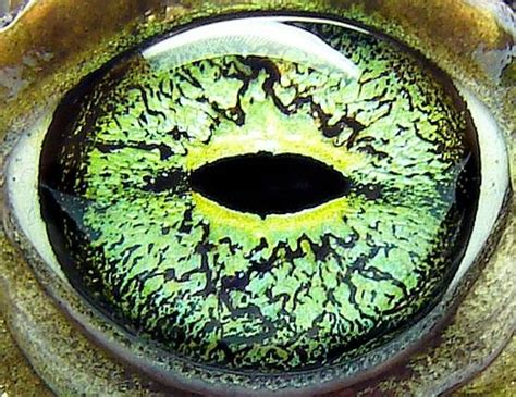 imagenes ojos de animales animal eyes up close and personal treehugger