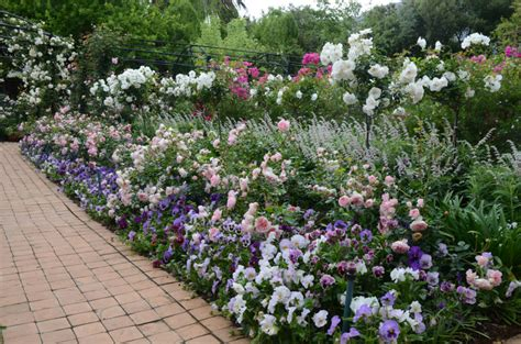 Types Of Bedrooms by Companion Planting In The Rose Garden Sa Garden And Home