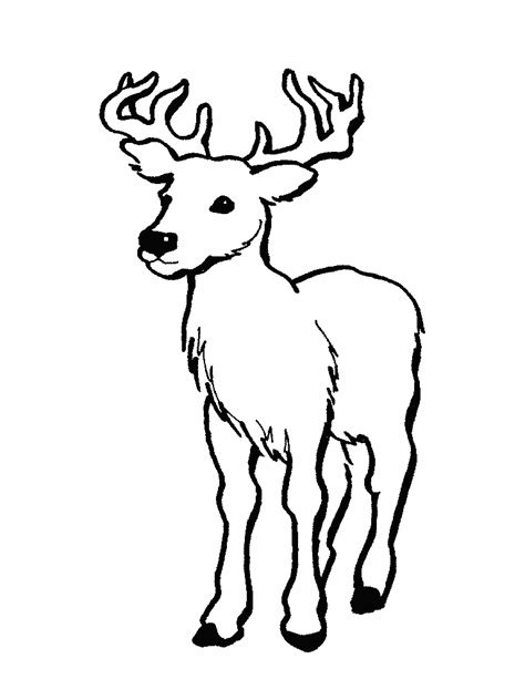 coloring page deer deer coloring pictures deep forest coloring picture