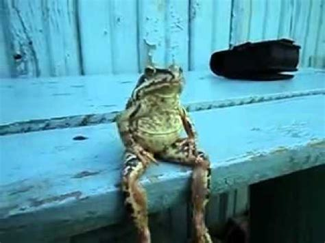 frog on bench a frog sitting on a bench like a human damn cool pictures