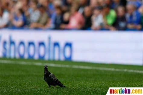 aksi gocekan seekor anjing di tengah laga sepakbola ogut267 ketika penyusup memasuki lapangan hijau