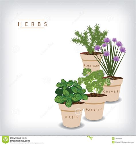 herb powerpoint themes herb background stock vector image of illustration