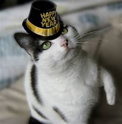 the year of the cat new year happy new year new years resolutions 2012 chit chat and