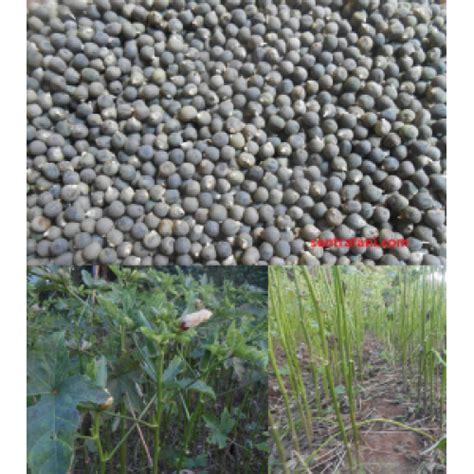 Benih Buah Okra jual benih okra merah varietas burgundi 100 gram