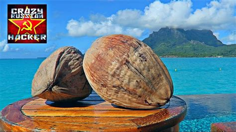 how to husk and open coconut without tools tell me how