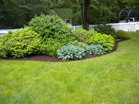 Bushes For Landscaping Landscape Bushes Newsonair Org