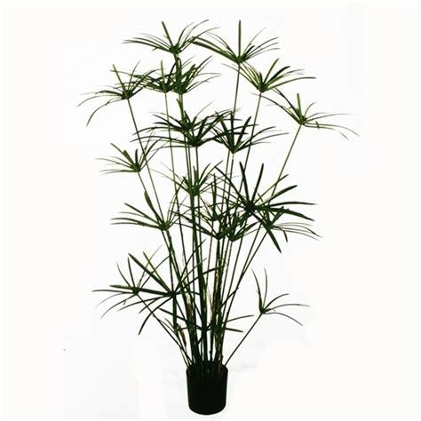 piante da tenere in casa piante da tenere in casa simple with piante da tenere in