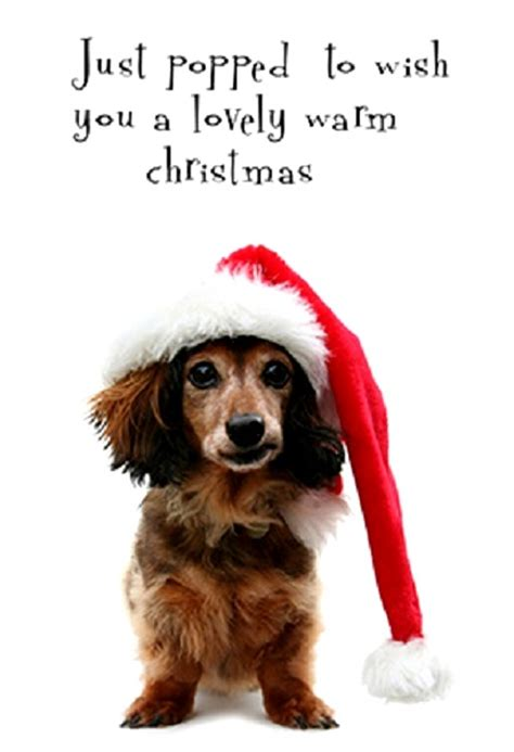 Free Printable Christmas Cards Dogs | printable christmas cards christmas celebration