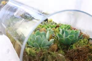 items similar to another world large glass tube terrarium on etsy