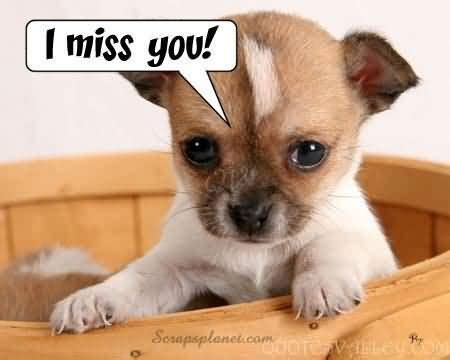 puppy i you image i miss you quotesvalley