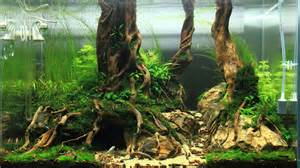 driftwood aquascape a collection of beautiful aquascapes kristelvdakker