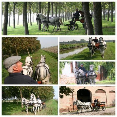 carrozze per cavalli carrozze cavalli 187 il criollo e mario girotto